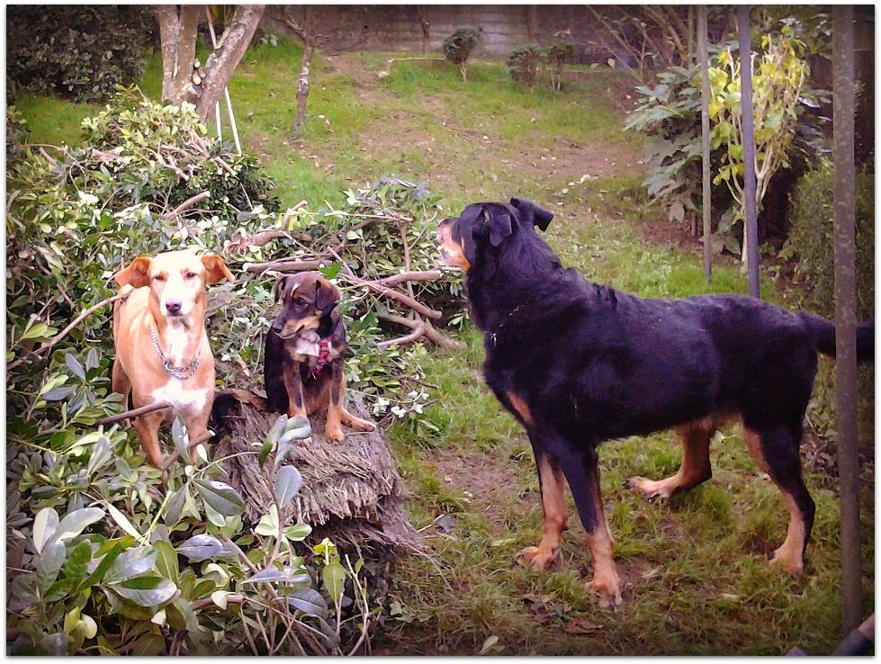 Perros en el jardín