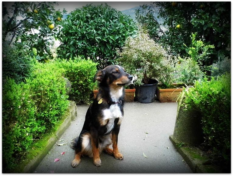 Posando en el jardín